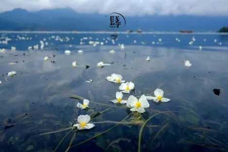 泸沽湖的水性杨花已开你什么时候来